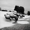 In a Cemetery, Portland (austin granger) Tags: cemetery portland shrubs shrubbery hedges winter snow ice death cold square film gf670
