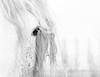 L'oeil (G.Corsand) Tags: astoundingimage autofocus af alpha7 alpha bokeh blackandwhite blanc camera digital 35mmfullframe 35mm expert fullframe f18 fe55 group chevaux horses hybridecamera hybride lens lens55mm lenssonyzeiss manuel manual manualfocus mount mirrorless noiretblanc numérique objectif photographer photographe photo pleinformat photography sony sonnar t white zeiss z ilce7 iso image a7 55mm 50mm