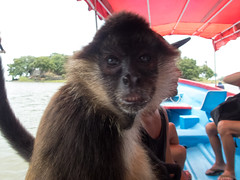 P8171125_LR (CharlieBro) Tags: 2016 centroamerica lagonicaragua lucy nicaragua agosto animal animale august barca boat lago lake lancha monkey natura nature scimmia summer wild