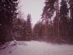 Дошли до перекрестка лесных дорог.