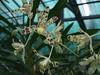 Orchidées d'Auteuil (cristoflenoir) Tags: auteuil serre orchidée
