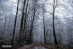 Dernier Jour de l'Année (CH-Romain) Tags: hiver snow neige winter france foret arbre tree feuille nature morte brume brouillard gele chemin paysage landscape voie glace flocon