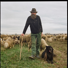 Italians (giancarlo rado) Tags: hasselblad carlzeiss planar8028 alps alpi flock gregge workingpeople trentino travell sheperds sheperd sheep regionetrentinoaltoadige provinciaditrento people pecore pastori transumanza ritratto portrait picturesofitalians photosofitalians paesaggioitaliano northitalians northernitalians nordest italy italiansheperds italians italianphotography italia italianpeople renatofronza roncegno sekonicl208twinmate peopleatwork italianpeopleinitaly fotografiediitaliani ritrattiitaliani associazionedeipastorideltriveneto photosofnorthernitalians lavoro northernitalianpeoplephotos picturespeopleitaly photosofitalianpeople