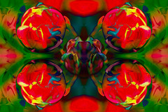 Tulip (Shastajak) Tags: tulip flower springflower photoshopcc layers mirroring blending sphere spherize icantremembereverythingididtogethere