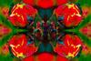 Tulip (Shastajak) Tags: tulip flower springflower photoshopcc layers mirroring blending sphere spherize icantremembereverythingididtogethere