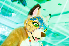 _MG_0704 (Tiger_Icecold) Tags: confuzzled cfz2016 cf2016 furcon furry convention fursuit birmingham party deaddog ddp deaddogparty