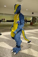 Sabre Walk-By (sabredragonfa) Tags: sabre dragon sabredragon takumori taku blue gold western fursuit suit further confusion 2017 fur con furcon furcon2017 fc2017 nightwolf nightwolf123