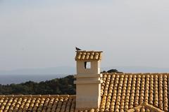 Skorsten (Benny Hnersen) Tags: chimney holiday pigeon greece taube griechenland schornstein due ferie sivota syvota 2015 skorsten augsut grkenland