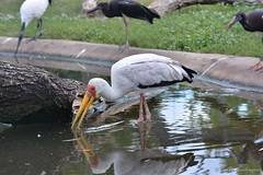 Tierpark 012 (Frank Guschmann) Tags: berlin zoo nikon tierpark vogel tierparkberlin d7100 flickrausflug frankguschmann nikond7100