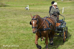 Concours d'attelage à Corlay (claude 22) Tags: concours attelage corlay chevaux trait cheval caballo paard paarden άλογο cavallo cavalli cavalo breizh bretagne brittany claude22 horse animal farm claude22b