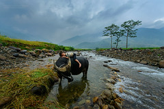 My friend (SaravutWhanset) Tags: china travel boy people holiday water river asian thailand photography photo buffalo asia rice action terrace culture bluesky vietnam blackground beatiful chield terracerice jouner
