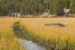 Rock Creek Canyon (BDFri2012) Tags: california ca wood trees reflection water grass creek stream canyon sierra marsh highsierra rockcreek us395 sierranevadamountains easternsierra