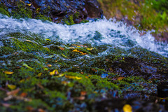 Before the Fall (craig. bishop) Tags: green water waterfall moss stream australia goldcoast