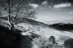 The Malverns in Mono! (Macro light) Tags: blackandwhite walking wildlife hills trust worcestershire landscapephotography themalvernhills