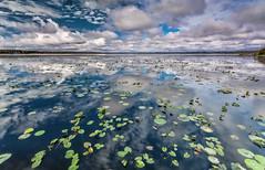 Reflections on Lake Ashby. (Reflejos en el Lago). (Samuel Santiago) Tags: beach digital sunrise landscape pier florida daytonabeach fineartphotography canonef1740mmf4l canon5dmkii samuelsantiago sunglowfishingpier sammysantiago