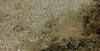Painted Comber Baby, Mgarr Ix-Xini, Gozo (yayapapaya77) Tags: fish sand underwater diving malta fisch mediterraneansea gozo tauchen unterwasser mittelmeer mgarrixxini paintedcomber schriftbarsch canonpowershotg15