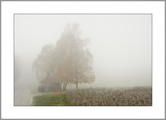 November-Nebel (Fog in November) (alfred.hausberger) Tags: november nebel felder kapelle nebelstimmung geroling