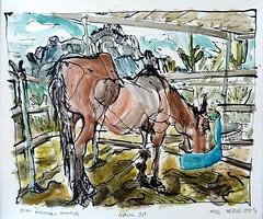 Elvis on Saturday Morning (Kerry Niemann) Tags: apachejunction horsedrawing inkandwatercolordrawing