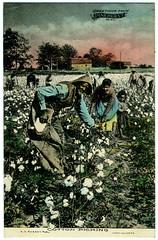 Anglų lietuvių žodynas. Žodis cotton on reiškia medvilnės lietuviškai.