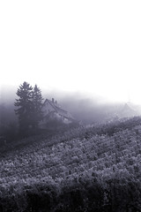 Last house up the hill (Isengardt) Tags: house monochrome up berg fog canon vintage germany landscape deutschland eos 50mm vineyard europa europe nebel view hill foggy haus vine monochrom aussicht landschaft wein weinberg fellbach hgel badenwrttemberg hoch neblig derbergruft upthehill 550d weinernte denberghinauf