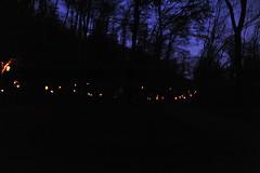 La Magia del bosco di notte 2015