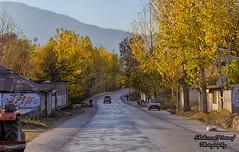 Shinkiari, Mansehra (Shehzaad Maroof Khan) Tags: autumn pakistan colors yellow gold drive golden highway hour karakoram kkh roads ontheroad mansehra kpk shinkiari autumninpakistan pakistanautumn