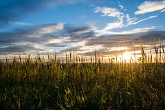 Good Mornin' in Benningen (nazim1505) Tags: blue sunset sky sun sunlight field clouds germany landscape deutschland landscapes cloudy stuttgart feld felder himmel wolken fields fujifilm grn blau 18 landschaft sonnenaufgang fujinon direct ludwigsburg landschaften lightroom 18mm wolkig xf badenwrttemberg xe1 benningen