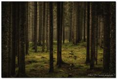 "Labyrinth (""Deca"") Tags: dolomiti dolomites montagna mountain boschi woods alberi trees sanmartinodicastrozza siror estate summer agosto august hdr trentinoaltoadige"
