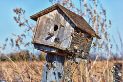 A lovely 1 bedroom. (slammerking) Tags: birdhouse bluesky nice pretty nature weatherd peelingpaint woodgrain