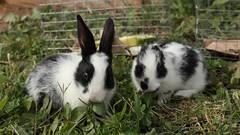 Rabbits (qeighty) Tags: animal animals rabbits outdoor colorsinourworld outdoors superphotographer