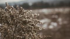 Winter_15 (losing.today) Tags: nature oregon outdoors pacificnorthwest portland pdx portlandor portlandoregon cold coldseason winter