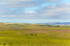 Horses in the meadow in Varmahlíð in Skagafjörður, North of Iceland (thorrisig) Tags: 06072016 dýr varmahlíð hestar spendýr sveit víðátta iceland ísland island thorrisig thorfinnursigurgeirsson thorri þorrisig thorfinnur þorfinnur þorri þorfinnursigurgeirsson sigurgeirsson sigurgeirssonþorfinnur nature náttúra norðurland northoficeland north farm skagafjörður skagafjordur skagafjord animals icelandicanimals horses icelandichorses icelandichorse mamals vastness openspace