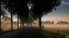 Morning light and sun rays (BraCom (Bram)) Tags: bracom sunrise zonsopkomst trees bomen dike dijk fence hek mist fog sunrays zonnestralen road weg morning ochtend autumn herfst fall nieuwetonge goereeoverflakkee zuidholland nederland southholland netherlands holland canoneos5dmkiii widescreen canon 169 canonef24105mm blog bramvanbroekhoven nl
