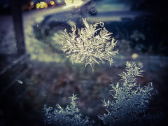 finding snow*stars (***toile filante***) Tags: frost winter cold kalt poetic poetisch soul soulful emotions emotional macro dof bokeh nature natur morning morgen light licht