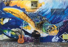 Sea turtle (panoround hutter) Tags: caribbean turtle sea swim water street art panoroundhutter hutter hutterdesign mare graffiti streetart