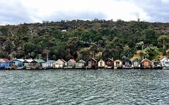 Shacks at Cornelian Bay.