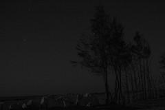 The trees also may sleep (Amr Tawwab) Tags: sacred tree trees rest sleep may dark night desert wadi rayyan noshade nothing west eg egypt egyptian tawwab mylens mywork myeye myown mine splendid awesome abstract lighting photography photographing photo photographer survive alife alone lonely dead die slept sleeping line get stones sand space scape landscape lawsaturation black blackwhite blackandwhite white bw darkness