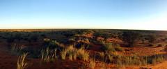 Kalahari Panorama