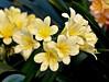 Flowers. (ost_jean) Tags: ostjean nikon d5200 tamron sp 90mm f28 di vc usd fleurs bloemen