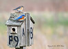 "Eastern Bluebird Mating Pair (3 of 4) in Spring at Duke Farms of Hillsborough NJ (takegoro) Tags: dukefarms naturepreserve ""hillsborough nj"" nature sanctuary spring wildlife bird ""eastern bluebird"" blue orange mates pair couple"