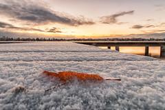 Das letzte Herbstblatt im Schnee (raschmichael) Tags: lzb morgens niederneuendorf niederneuendorfersee oberhavel