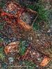 Rusty,Groningen Stad,the Netherlands,Europe (Aheroy) Tags: painterly schelpen roest aheroy aheroyal groningen groningenstad stilleven stillife tonemapped hdr mosselen zoetwatermosselen mussels