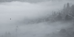 IMGP4042 (jamin.sandler) Tags: pentaxistds smcpentaxa35105mmf35 einkerem fog