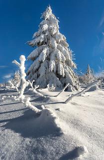 im Schnee Gewand
