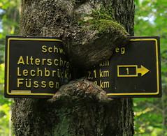 Hohenschwangau (spitzkoefele) Tags: wegweiser hohenschwangau füssen bäume
