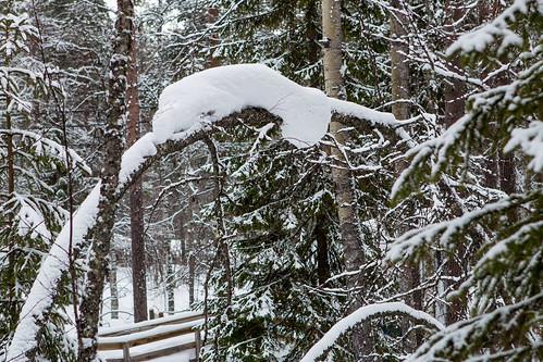 2015_02_Lapland_328