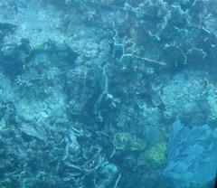 24. John Pennekamp coral reef (Misty Garrick) Tags: johnpennekamp johnpennekampreef johnpennekampcoralreefstatepark coralreef florida keylargofl keylargo floridakeys atlanticocean