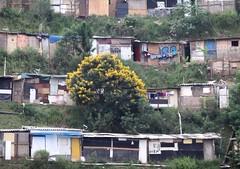 Por Aí-Morro do Macaco-Diadema. (nariobarbosa) Tags: porai rua arvore street favela morrodomacaco diadema saopaulo brasil brazilian