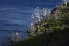 imgp3660 (Mr. Pi) Tags: trees lake deadwood hills chile andes nationalpark patagonia torresdelpaine lagoskottsberg