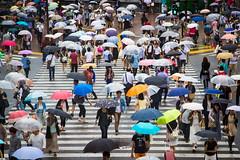 Umbrellas (steffen.fleckner) Tags: street city people rain japan umbrella tokyo crossing traffic outdoor crowd shibuya crosswalk